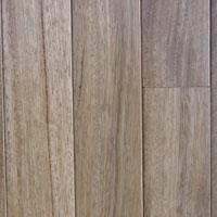 Moxon Timbers Out of Australia Australian Spotted Gum Unfinished select grade 3.25in